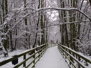 Alder Carr (Winter)